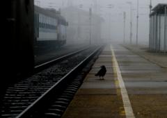 РЖД, Трансконтейнер, железнодорожные грузоперевозки, контейнеры