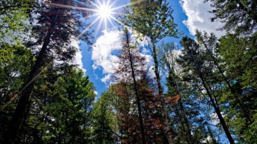 лесов фото китайских