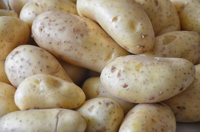 Новосибирская область накормит КНР экологически чистой картошкой