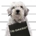 Аватар пользователя Спиридон Залевский