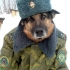 Аватар пользователя Эльдар Богданов